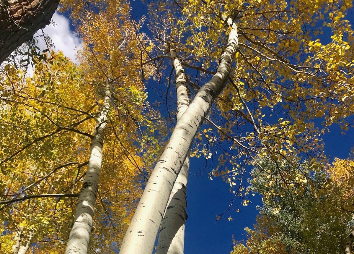 reduce cancer stress aspen trees
